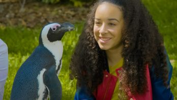 girl sits close to a penguin and discusses its life cycle
