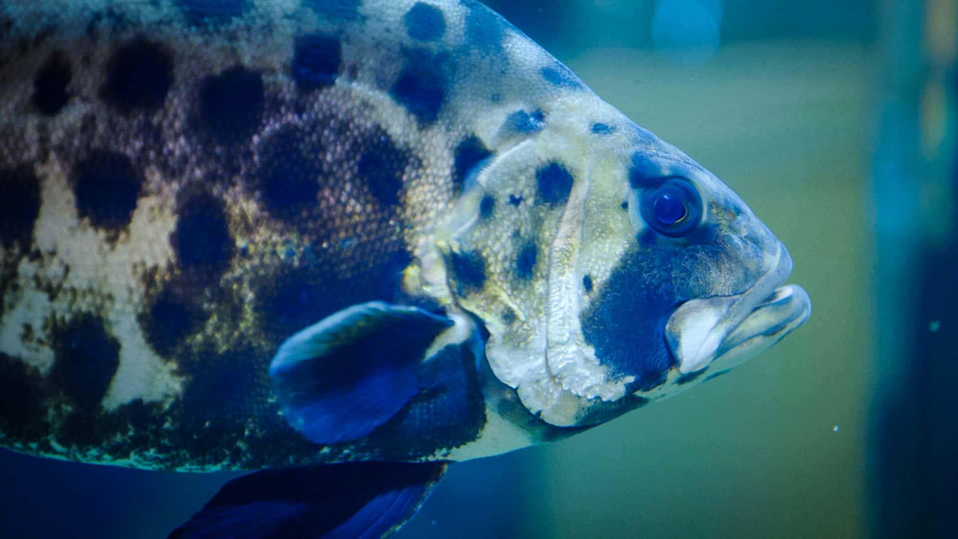 fish swimming through bag water quality