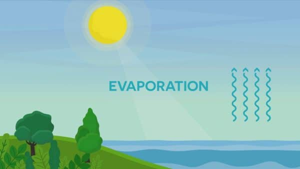 Learn the Water Cycle Definition