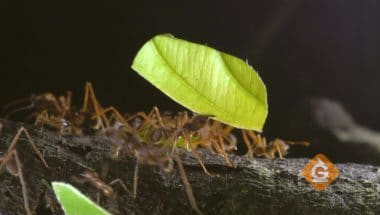 Ants behaving in a group