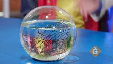 Learn about ecospheres are ecosystems for kids