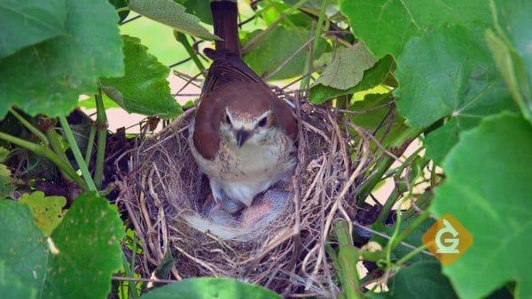 bird nest in a backyard ecosystem