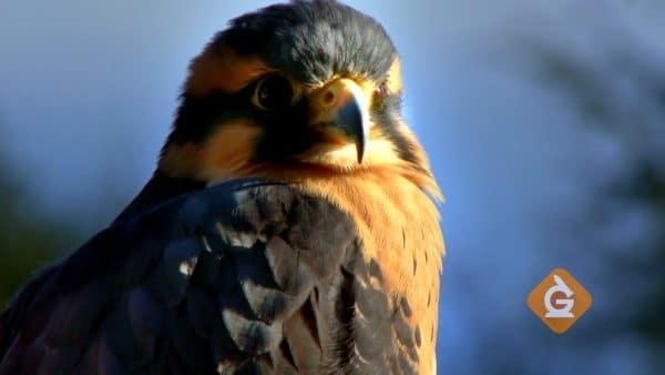 closeup of a bird represents the biosphere