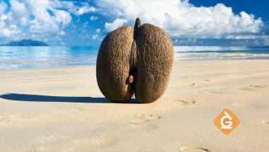 Learn about the sea coconut plant structure here!