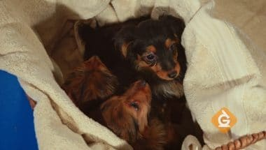 Variation of traits can be seen in puppy litters