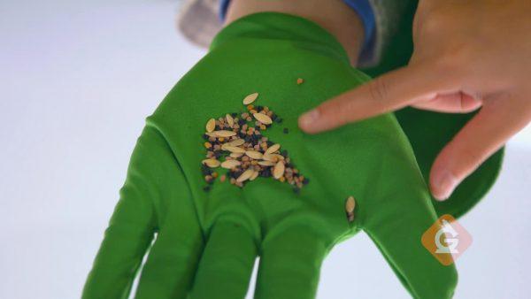 closeup of various seeds