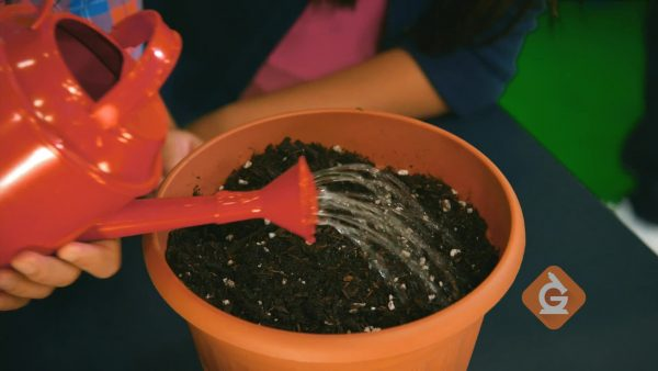 watering seeds in a plant pot so they grow