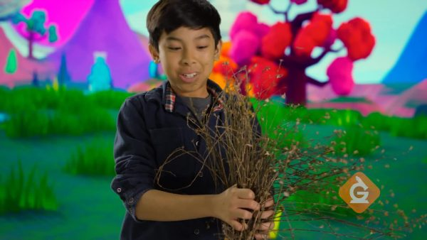 boy shows how a plant can be pulled out the ground