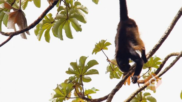 monkey hanging from a tree with its tail