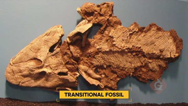 Read About The Fossil Record | Science for Grades 6-8 ...
